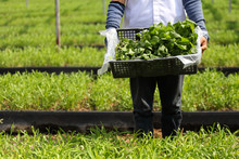 Fresh Harvest Vegetable From O...