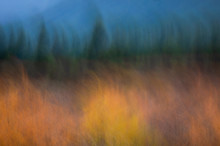 Blurred Yellow And Green Autum...