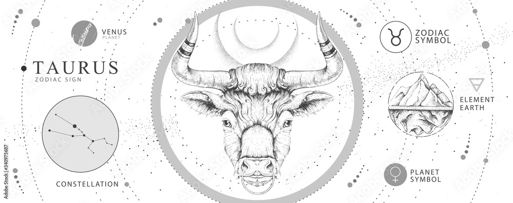 Fototapeta Modern magic witchcraft card with astrology Taurus zodiac sign. Realistic hand drawing bull head. Zodiac characteristic