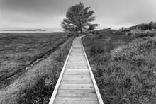 Boardwalk Over Grassy Field At Morro Bay State Park