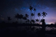 Silhouette Palm Trees At Beach Against Sky At Night
