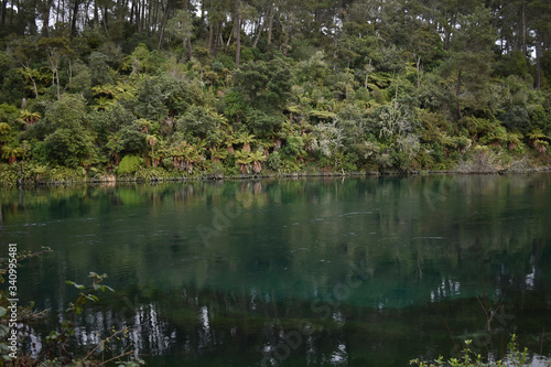 Vászonkép bushwalk next waikato river in taupo