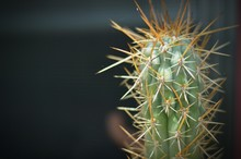 Close-up Of Cactus Growing Outdoors