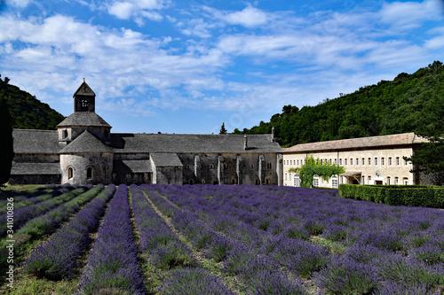 Photo champ de lavandes en fleur devant l'abbaye de Sénanque