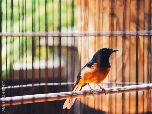 Tablou Canvas Close-up Of Robin In Cage