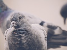 Close-up Of Pigeons Perching On Field