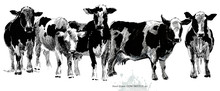 Hand Drawn Cow Sketch Illustr...