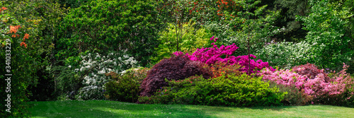 Fotografija Beautiful Garden with blooming trees during spring time, Wales, UK, banner size
