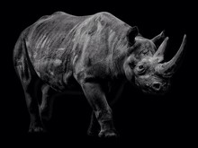 Side View Of Rhinoceros Over B...