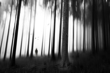 Person Standing Amidst Trees On Forest