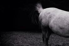 Rump Of Standing Horse