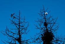 Na Mira Da Lua