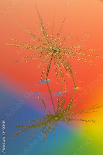 Fototapety, obrazy: Fiore di tarassaco astratto