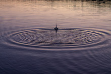 Ripples In Dusky Water From Throwing Rocks