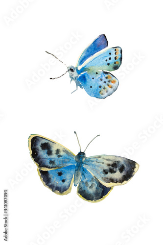 Fotografie, Obraz Set of watercolor butterfly Polyommatus dorylas, the turquoise blue butterfly of