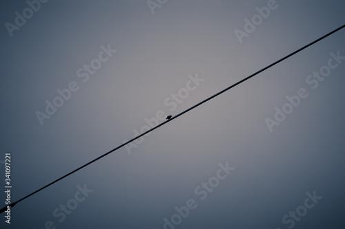 Bird Perching On Power Line - fototapety na wymiar