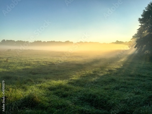 Photo Scenic View Of Grassy Field In Foggy Weather