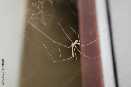 Spider with spider web in home close up on colorful blurry background Canvas Print