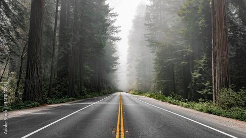 Slika na platnu Scenic road in Redwood National Forest