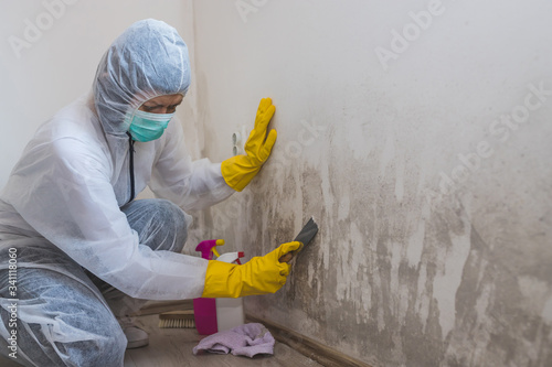 Fototapeta Female worker of cleaning service removes mold from wall using spray bottle with mold remediation chemicals and scraper tool