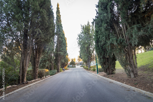 Cuadros en Lienzo Road to the vehicles of important guests at Mount Herzl, the national park inside the Jerusalem Forest near the military cemetery