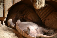 Close-up Of Animals Relaxing O...