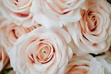 Pastel orange roses macro shot