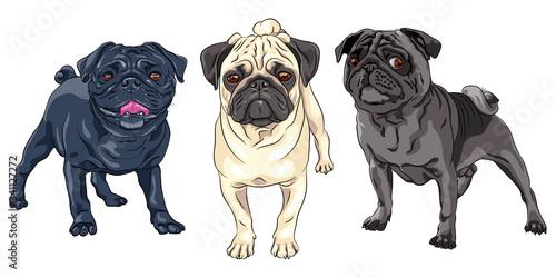 Fotografía Vector set of cute dogs pug breed black, brown and fawn color