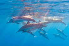 Pod Of Dolphins Swimming Near ...