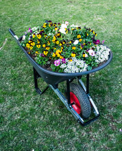 Garden Wheelbarrow Filled With...