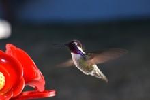 Colorful Hummingbird  Feeding ...
