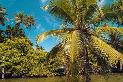 Obraz Rośliny i palmy tropikalne nad rzeką na tle niebieskiego nieba w słoneczny dzień. - fototapety do salonu