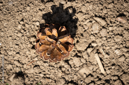 Valokuva Top down view of pine cone on dry soil, casting a shadow