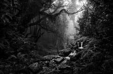 Deep Tropical Jungle In Black ...