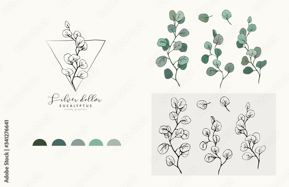 Fototapeta Silver Dollar eucalyptus logo and branch. Hand drawn wedding herb, plant and monogram with elegant leaves for invitation save the date card design. Botanical rustic trendy greenery