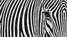 Full Frame Shot Of Zebra