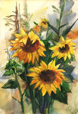 Bouquet of sunflowers in the field. Watercolor drawing - 341291653