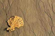 A Fan-shaped Sea Sponge Lying On A Beach. The Retreating Tide Has Left Patterns In The Sand That Resemble The Sponge's Shape