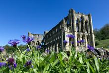 Rievaulx Abbey With Blue Flowe...