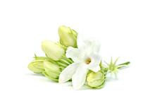 Jasmine Flower Isolated On Whi...