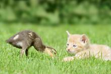 Animal Friends, Kitten And Duc...