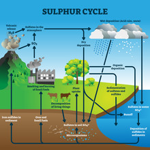 Sulphur Cycle Vector Illustration. Labeled Geological Earth Elements Scheme