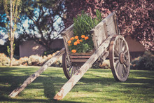 Flowers In Wooden Push Cart On...