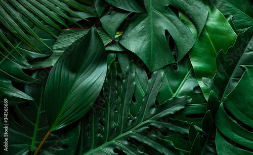 Papier Peint - closeup nature view of monstera leaf and palms background. Flat lay, dark nature concept, tropical leaf
