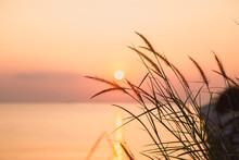 Grass And Golden Light At Sun ...