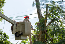 Technician Staff Cut Trees Fro...