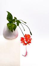 Single Japanese Lantern Flower...