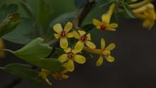 Spring, Flowers In The Garden
