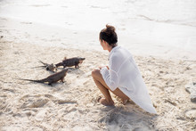Woman Feeding Iguanas On Beach...