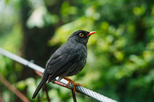 Blackbird On A Branch